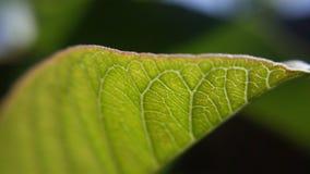Light raining on green leaf Royalty Free Stock Image
