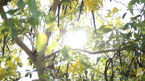 The light ray of sunrise through the coon tree. In the morning stock footage