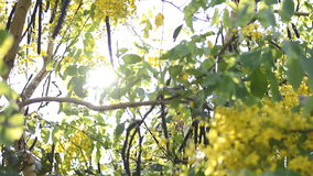 The light ray of sunrise through the coon tree stock video footage