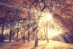 Light rays fall landscape trees Stock Image