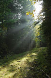 Light Rays in the Forest. Foggy forest with light rays shining on a dirt path Stock Photography