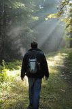 Light Rays in the Forest. Man hiking in a foggy forest with light rays shining on a dirt path Royalty Free Stock Images