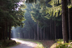 Light rays in the forest Royalty Free Stock Photos