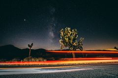 Light Rays and Milky Ways take over Joshua Tree royalty free stock photo
