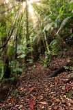 light rays in Rainforest path  Royalty Free Stock Photography