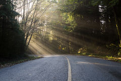 Light Rays on a Road. Light rays penetrating coastal forest Stock Image