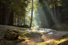 Light rays through the trees . late autumn landscape. A walk through the woods near Brasov. Romania. Soft focus, blured background, low key, dark background stock photo