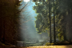 Light rays through the trees . late autumn landscape. A walk through the woods near Brasov. Romania. Soft focus, blured background, low key, dark background royalty free stock photos