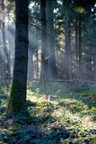 Light Rays in Wood Royalty Free Stock Images