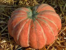 Light red pumpkin. Waiting for halloween Stock Photo
