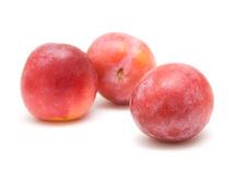 Light red ripe large plums Stock Photos