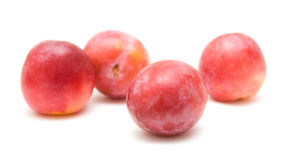 Light red ripe large plums Stock Image