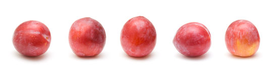 Light red ripe large plums Royalty Free Stock Images
