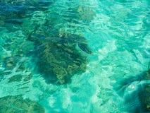 Light reflection on green sea Royalty Free Stock Photo