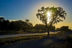 Light reflections on holm oaks Stock Images