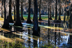 Light reflexion in a marshland. In Florida Stock Images