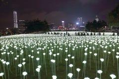 Light Rose Garden in Hong Kong Stock Images