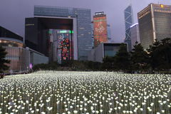 Light Rose Garden in Hong Kong Royalty Free Stock Photo