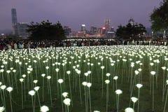 Light Rose Garden in Hong Kong Royalty Free Stock Photography