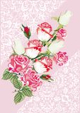 Light roses on pink decorated background Stock Photos