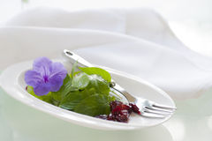 Light Salad Royalty Free Stock Photography