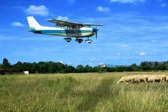 Light school plane on final. Light general aviation plane on final over sheeps stock image
