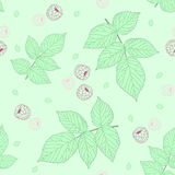 Light Seamless pattern with raspberries and green raspberry leaves. Stock Photography