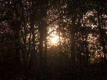 Light setting shining through trees blur nature leaves autumn da Stock Photography