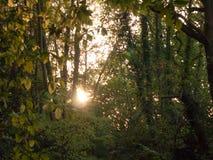 Light setting shining through trees blur nature leaves autumn Royalty Free Stock Photos