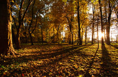 Light of the setting sun in autumn park Royalty Free Stock Photography
