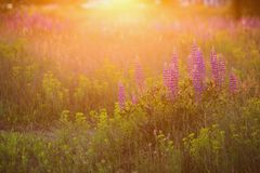 Art photography. Beautiful nature background royalty free stock images
