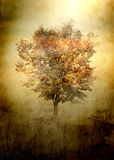 Light and shade. Grunge retro background with lonely tree Stock Images