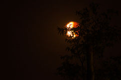 Light and Shade Blood Moon behind in shadow of trees Stock Photo