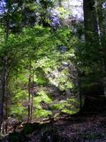 Light and shade in silent woods. Late afternoon sunshine in silent woods, backlighting leaves and creating deep shadows Stock Photos