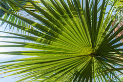 Light and shadow on backlit sugar palm leaf and coconut leaf, natural background Royalty Free Stock Photography