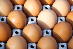 Light and shadow on eggs. Stock Images