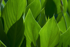 Light and shadow of green leaf. Light and shadow of tropical green leaf stock image