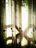 Light and shadow through lace curtains Stock Photography