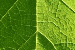 Light and shadow on a leaf Royalty Free Stock Image