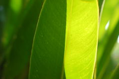 Light and shadow on leaf of plant Royalty Free Stock Photography