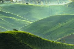 Bandung tea plantation stock photo. Image of culture ...