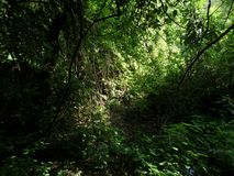 Walk in the tropical forest. Light and shadow among the trees of the tropical forest Royalty Free Stock Image