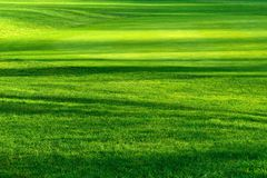 Light and shadows on a beautiful lawn Stock Photography