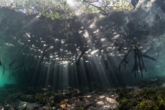 Light and Shadows in Mangrove Forest Royalty Free Stock Photography