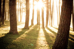 Light shine through the trees Royalty Free Stock Images