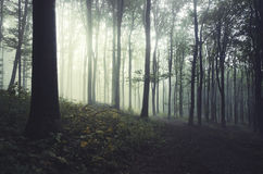 Light shining in dark forest with fog in morning Royalty Free Stock Photos