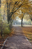 Light shining on foggy forest path Stock Image