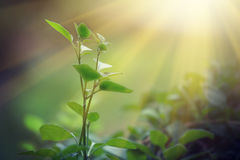 Light shining on a green sprout Stock Photography