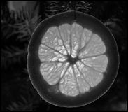 Light shining through orange pleasing. Orange to orange Christmas tree through which the light Royalty Free Stock Images