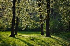 Light shining through trees Royalty Free Stock Photos